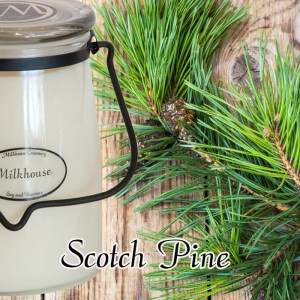 Milkhouse Candles SCOTCH PINE Świeca Duża