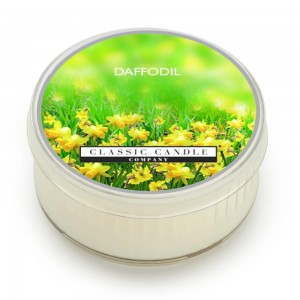 Classic Candle DAFFODIL SOY MiniLight